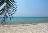 Coconut leaf on white sand beach and aqua sea — Stock Photo