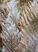 Parasit-pflanze — Stockfoto