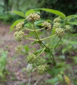 小さな野生植物 — ストック写真