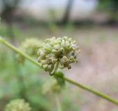 Closeup malá divoká rostlina — Stock fotografie