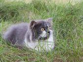 Persian kitten sit in green yard — Stock Photo