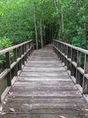 Wooden bridge — Stock Photo