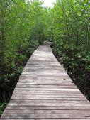 Boardwalk in mangrove forest — Stock Photo