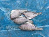 Poisson gourami sel séché — Photo