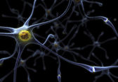 Neurons — Stock Photo