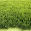 Rice crop — Stock Photo #15610619