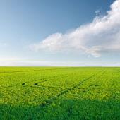 Rice crop — Stock Photo
