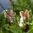 Two Fairy on vegetation — Stock Photo #18597641