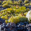 Grapes gathered — Stock Photo