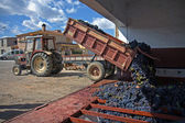 Tractor con uvas recogidas — Foto de Stock