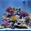 Awesome aquarium - Stock Photo
