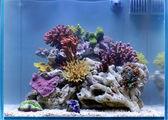 Awesome aquarium — Stock Photo