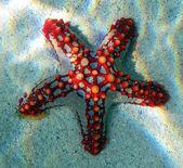 Sea star — Stock Photo