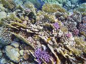 Coral reef scene — Stock Photo