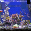 Stock Photo: Fish and coral tank