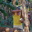 Stock Photo: Coconut seller