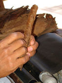 Preparing cigar — Stock Photo
