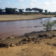 Hippo Pool in Kenya — Stock Photo