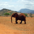 Elephants in Tsavo - Stock Photo