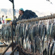 Fish market in Antofagasta — Stock Photo