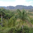 Stock Photo: Valley of Vinales
