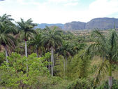 Valley of Vinales — Stock Photo