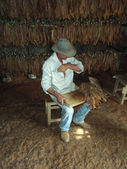 "Preparing a ""Puro Cubano"", Pinar del Rio — Stock Photo"