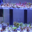 Aquarium  corals seller — Stock Photo