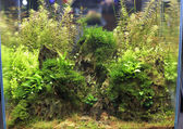Planted aquarium — Stockfoto
