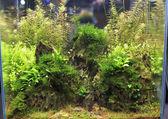 Planted aquarium — Stock Photo