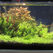 Planted aquarium — Foto Stock