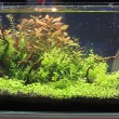 Planted aquarium — Stock Photo