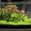 Stock Photo: Freshwater aquarium