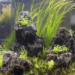 Freshwater aquarium — Stock Photo #33529997