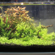 Planted Freshwater Aquarium — Stock Photo #36944419