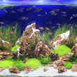 Stock Photo: Planted Freshwater Aquarium