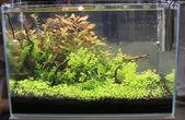 Planted Freshwater Aquarium — Stock Photo