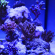 Colorful Saltwater Aquarium — Stock Photo #38928875
