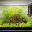 Planted Freshwater Aquarium — Stock Photo #38928893