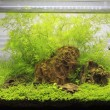 Planted Freshwater Aquarium — Stock Photo #38929199