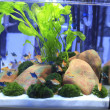 Planted Freshwater Aquarium — Stock Photo