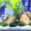 Planted Freshwater Aquarium — Stock Photo #38929585