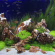 Planted Freshwater Aquarium — Stock Photo #38929623