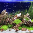 Planted Freshwater Aquarium — Stock Photo #38929671