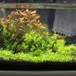 Stock Photo: Planted aquarium