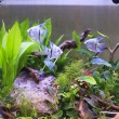 Tank with aquatic plants  — Stock Photo #41956799