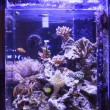 Colorful Saltwater Aquarium — Stock Photo #42017229