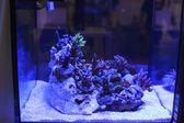 Colorful underwater Aquarium — Stock fotografie