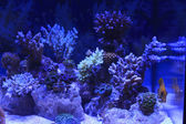 Colorful Saltwater Aquarium — Stock Photo