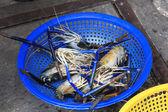 Fresh prawns for sale in Saigon — Stock Photo